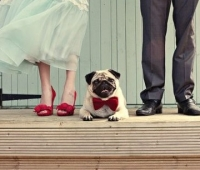wedding-pet